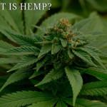 hemp review